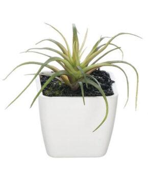 Mini plante en pot A
