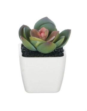 Mini plante en pot B
