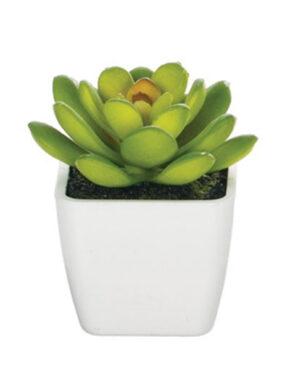 Mini plante en pot C