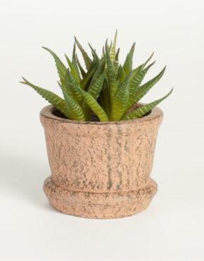 Succulente verte en pot